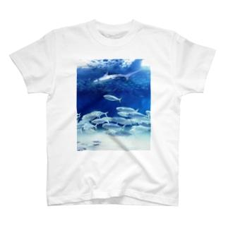 水中写真:シュモクザメと魚たち Hummer shirk & fishes T-shirts