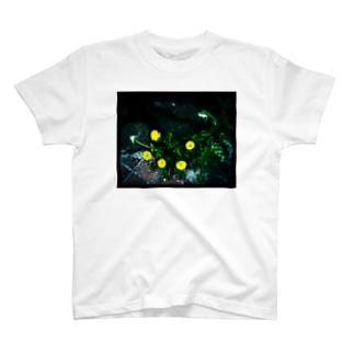 たんぽぽ薄光 T-shirts