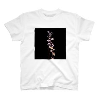 植物の写真2 T-shirts