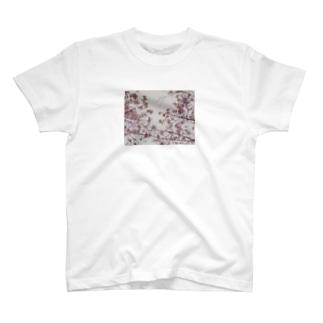sakura T-shirts