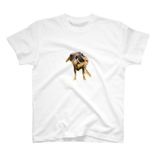 OSUGI T-Shirt