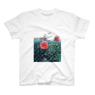 フェンスのダリア T-shirts