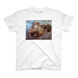 チャウ柴の赤ちゃん😍 T-shirts