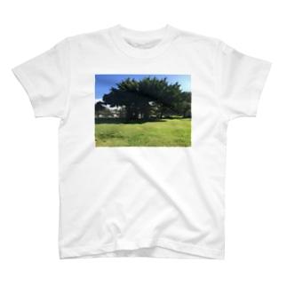 ガジュマルの木 T-shirts