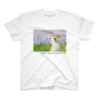 桜と柴犬 T-shirts