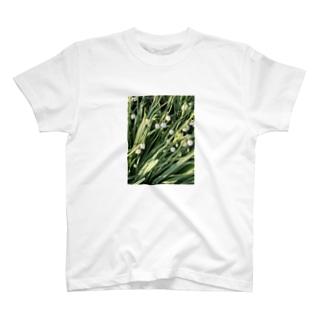 春の花 T-shirts
