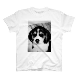 ビーグルBaby T-shirts