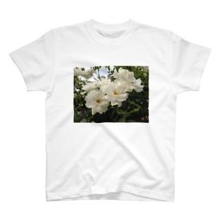 White Rose T-shirts