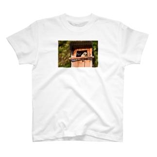 フクロウ 2021 T-shirts