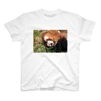 レッサーパンダ(お食事中) T-shirts