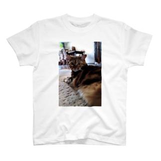 キビお見合い写真 T-shirts