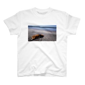 ちい むう ととろ Chi Mu Totoroのあまりにアザラシで… T-Shirt