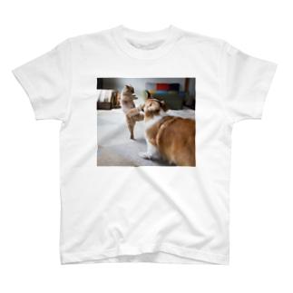 ちい むう ととろ Chi Mu Totoroのカンフー猫 T-Shirt