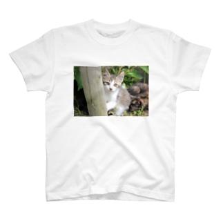 そっと様子をうかがう猫ちゃん T-shirts