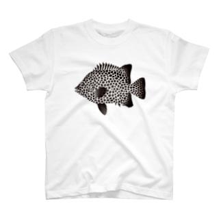 【魚類】イシガキダイちゃん☆石垣鯛 T-shirts