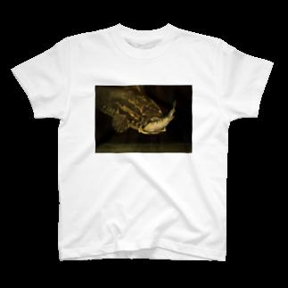 ぷらっこのシュールレアリスムな捕食するライギョ T-shirts