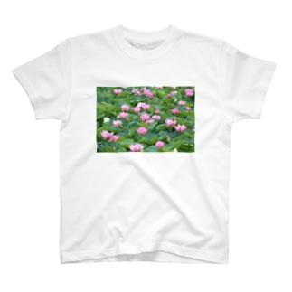一面の蓮 T-shirts