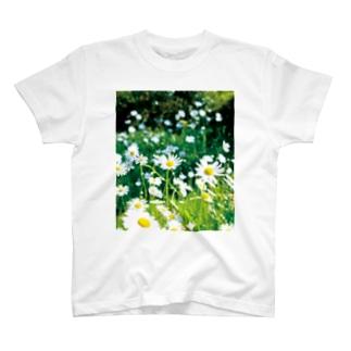 癒しの風景(シャスタデイジー) T-shirts