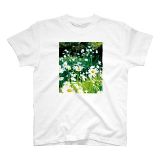 癒しの風景(シャスタデイジー) T-Shirt