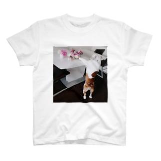 ブル T-shirts