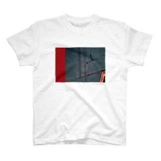 最近の写真 T-shirts