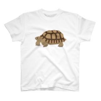 けづめりくがめさん 文字なし T-shirts