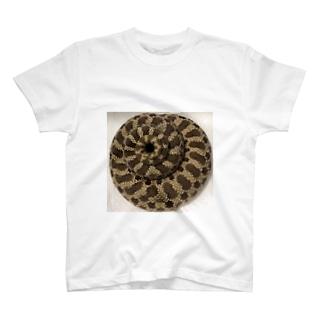 セイブシシバナヘビ🐍 T-shirts