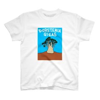 ドルステニア•ギガスTシャツ T-shirts