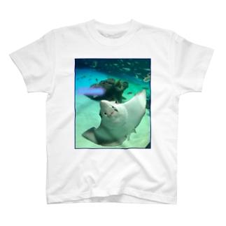 エイ Tシャツ T-shirts