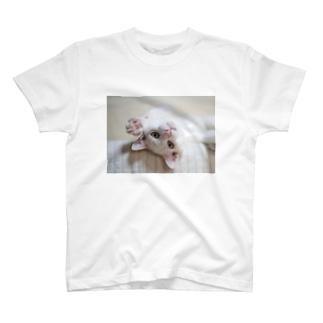 招き猫 珀ちゃん T-shirts