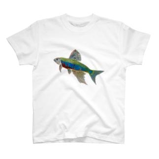 オイカワです‼️ T-Shirt