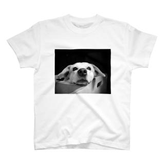 コハナちゃん T-shirts