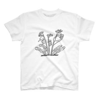 スターチス T-shirts