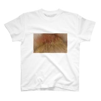 ぶりーちくん T-shirts