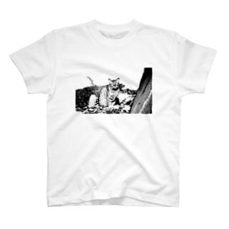 海辺の野良猫 T-shirts