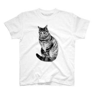midoriyamadaのこっちを見ているキジトラ猫 T-Shirt