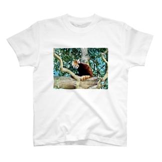 レッサーパンダ T-shirts
