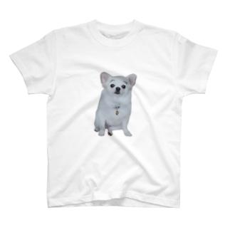 まゆげこむぎこ T-Shirt