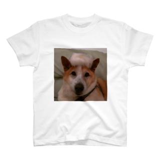 ロー T-shirts