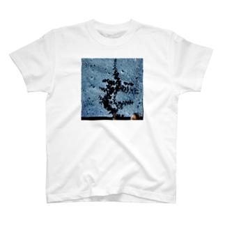 grow T-shirts