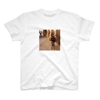 モロッコのロバ1 T-shirts