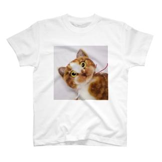 茶白さん T-shirts