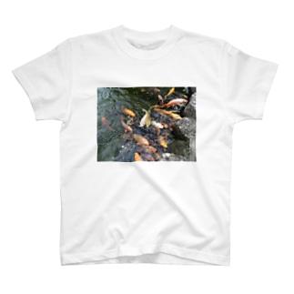 鯉の大群 T-shirts