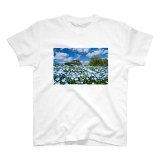 ネモフィラ畑 T-shirts