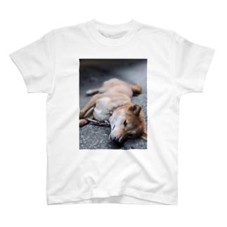 茶々T T-Shirt