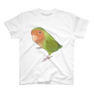 見つめるコザクラインコちゃん【まめるりはことり】 T-shirts