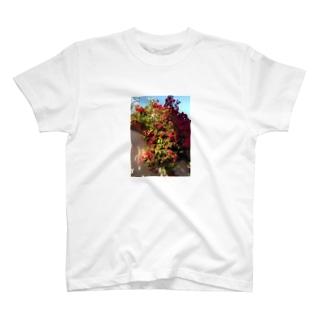 ブーゲンビリア T-shirts