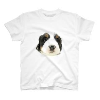 バーニーズマウンテンドッグA 子犬 Tシャツ