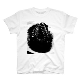 タコ(2) T-shirts