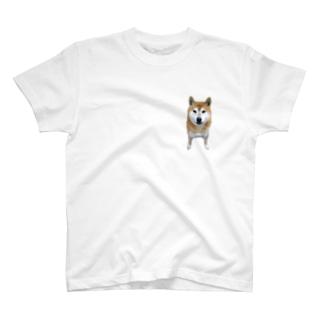 大きく育った豆柴くん T-shirts